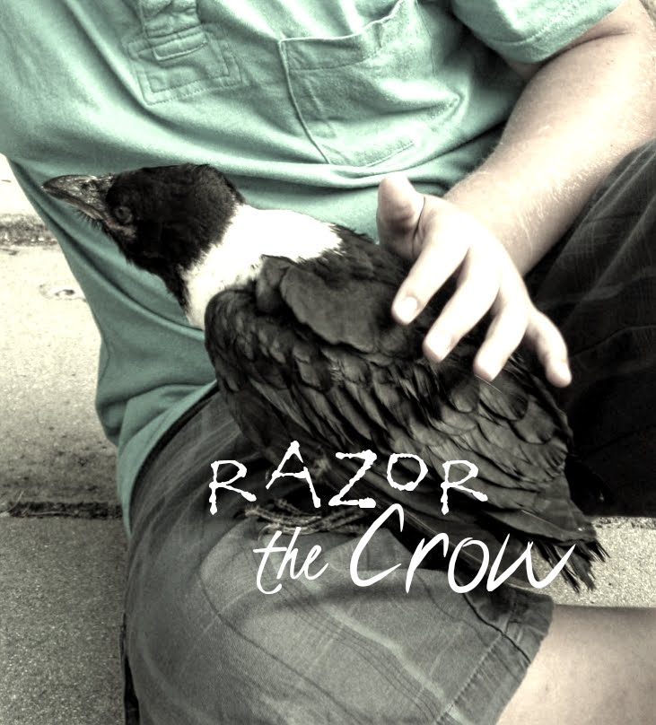 Lessons from A Crow