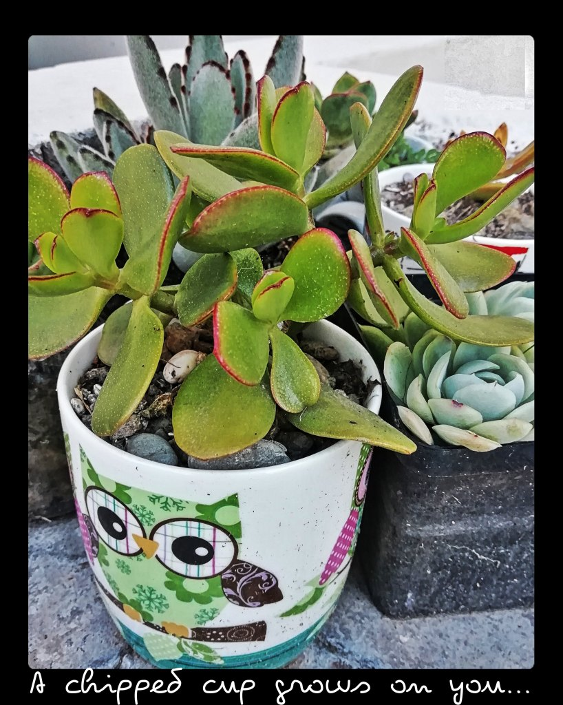 Succulent Success - A chipped cup grows on you