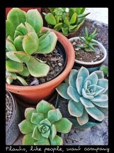 Succulent Success - plants want company
