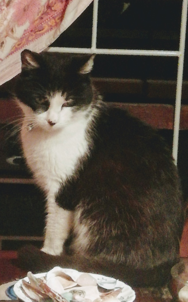 Photo of Bailey the Cat